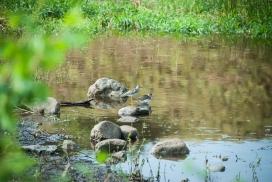 Shorebirds on Maryann Creek near Chesaw