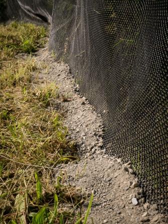 Toadlet fence