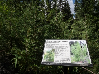 The Okanogan Highlands Alliance has installed some new interpretive signs on their trails