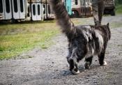 This cat patrolled the main street through Sandon