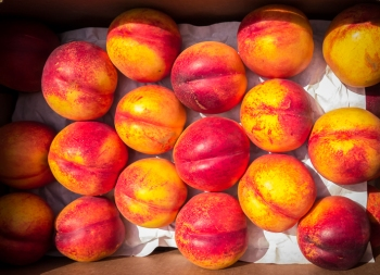 I bought a box of nectarines at the Twisp Farmers' Market. They will be made into jam or dried.