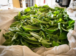 Basil is dried and ready to use
