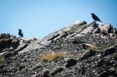 Ravens watch