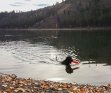 At Patterson Lake, Luna shows Sky about swimming and retrieving.