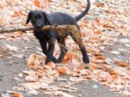 Look! I got you a stick!