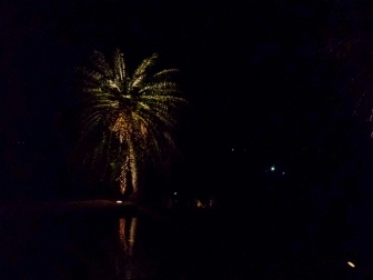 palm tree lit up at night