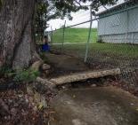 The tree is overtaking the sidewalk