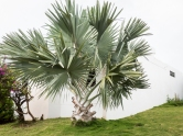 Love this palm