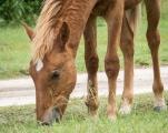 Free-range horses