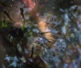 baby fish in a mangrove swamp