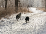 Luna and Wyatt Ann are delighted to be out on the trail together again!