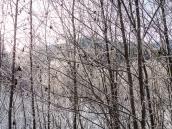 Frosty Wonderland