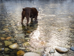 Juniper was the only to get in the river