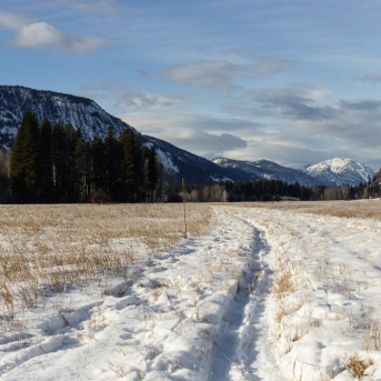 This should be a packed and groomed ski trail with a couple feet of snow and no grass showing through.