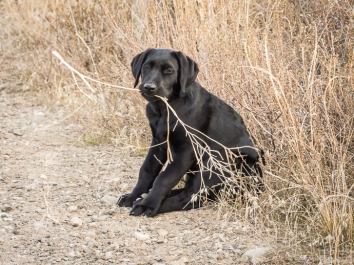 She might be a good tumbleweed retriever?