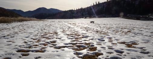 A frozen hay field