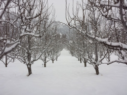 A walk in the orchard before the last leg of the trip
