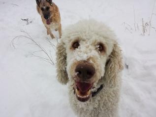 Zur, in the background and Ziggy - Luna's oldest dog friend.