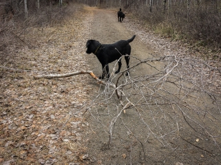 No trail sweep here, or so they say. Don't worry, I picked up all of her sticks and tossed them off the trail.