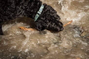 Luna gets a stick out of the muddy torrent
