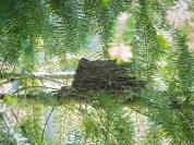 Robin's nest?