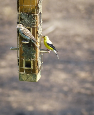 I put up feeders for the birds