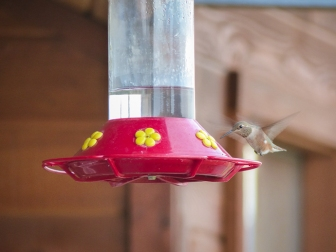 The hummingbirds are still here. I am surprised.