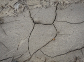 Yesterday the surface was parched dry and cracked