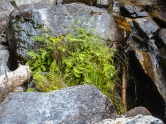 Tiny little garden tucked into the rocks