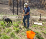 Eric and his co-worker from Methow Natives worked hard to get everything planted, mulched and caged.