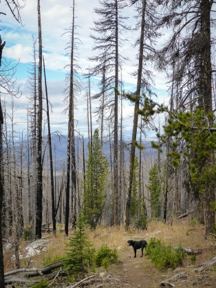 I always wonder when these burned trees will fall and hope it's not when I'm on the trail