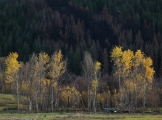 Fall colors contrasted with burned trees.