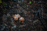 Frozen mushrooms