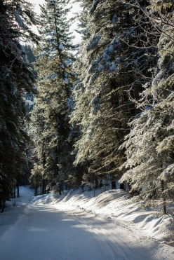 As the sun warmed the snow-covered trees, heavy drops of snow hit the ground. I avoided stopping under any trees and didn't get that unwelcome feeling of snow down the back of my neck.