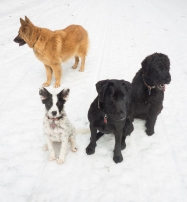 Attempting to get a photo of all four dogs.