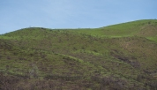 New grass growing on the hills above the canyon.