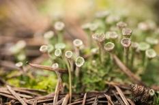 Moss cups