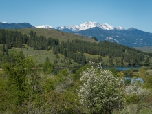Mountains over Pearrygin Lake with serviceberry in the foreground