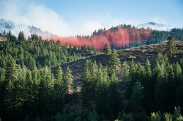 Even when the red fire retardant is dry, it will slow down or stop a fire's advance.