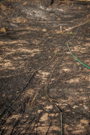A new hose to replace the burnt hoses going to the vegetable garden and fruit trees.