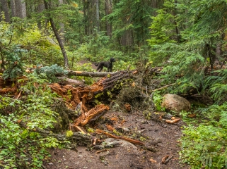 Two trees had fallen over the trail in this weekend's heavy wind storm