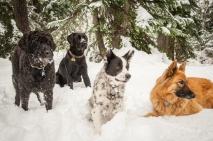An attempt at a four dog portrait