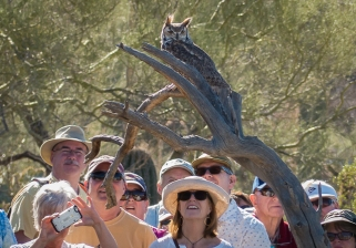 A Great-horned Owl was part of the raptor free flight demonstration.