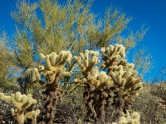 Cholla. I did not touch them.