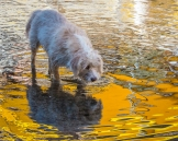 Abby seems puzzled by that brilliant yellow reflection from the boat's bimini