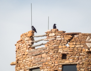 Ravens guard the top of the tower