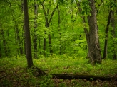 Deep green woods