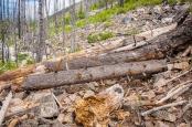 Avalanche debris strewn across the trail