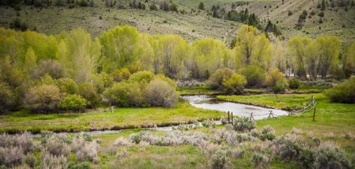 Grasshopper Creek