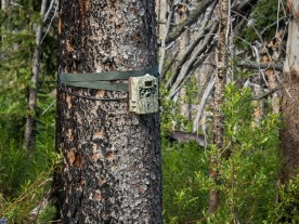 This game camera is aimed right at the trail. Are they counting hikers and dogs or looking for something else?